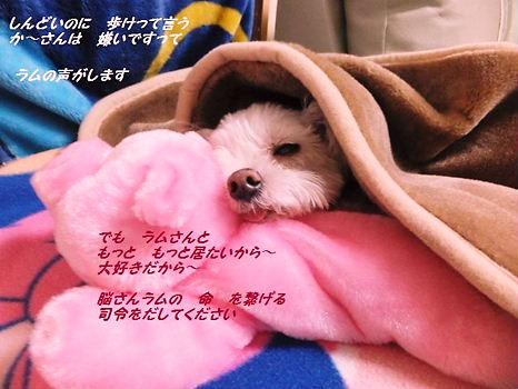 寒いですぅ~