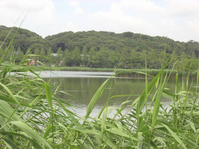 2013 6 24 佐鳴湖 063 佐鳴湖 665
