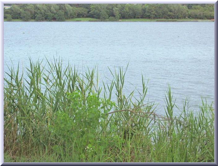 2013 9 5 佐鳴湖公園西岸 028 湖面 frs