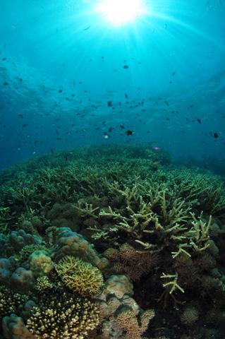 パプアの海