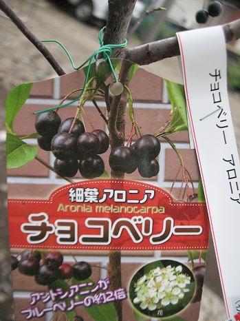 チョコベリー (3)