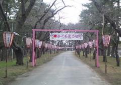 金木桜まつり (1)_600