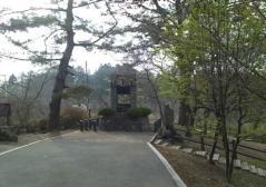 金木桜まつり (2)_600
