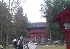 桜ウオーク (7)_600