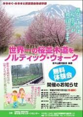 桜ノルW_300