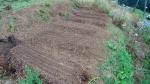 ほうれん草種まき畝