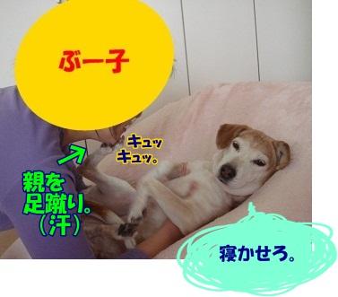12_01_15_02_.jpg