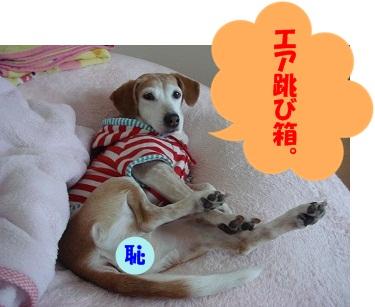 12_03_11_02.jpg