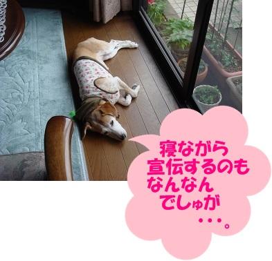 12_05_29_01.jpg