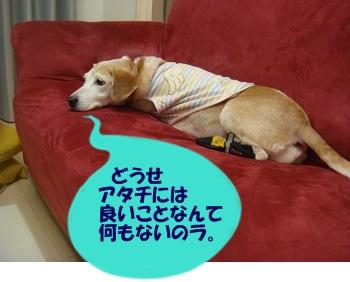 13_08_08_02.jpg