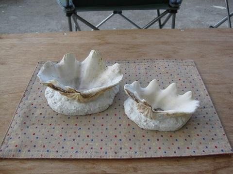 貝の灰皿 - ブログ用
