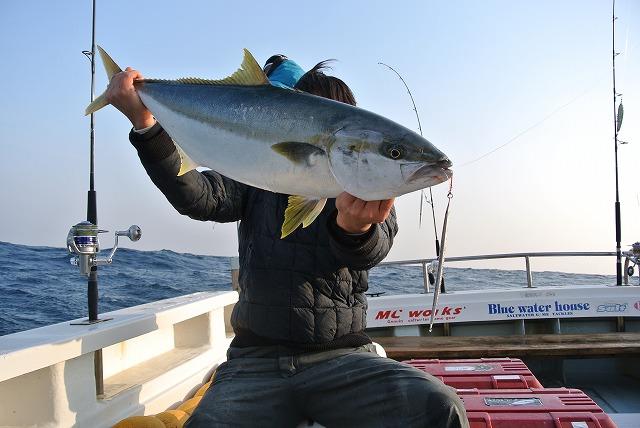 ヒラマサ釣りたい…