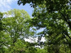東京都立府中の森公園