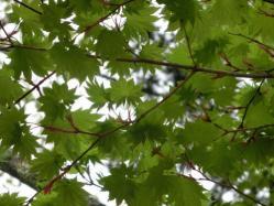 中禅寺湖畔の植物