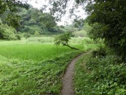 鎌倉広町の森