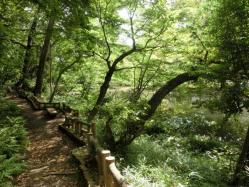 宝来公園の水辺の風景