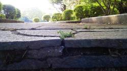 石畳の階段の隙間から