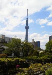 亀戸天神社 男橋から見た東京スカイツリー