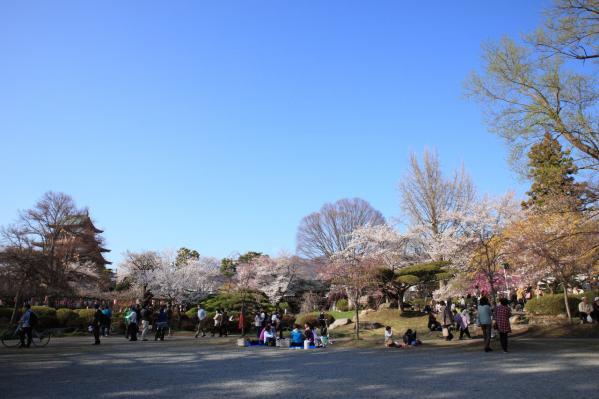 高島城_桜