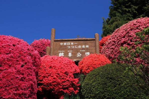 ツツジ_鶴峯公園
