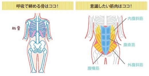 お腹痩せに効果的なウエストを細くする筋トレ ベ …