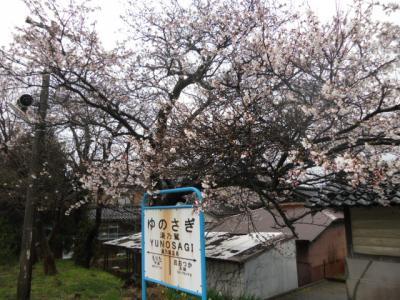 4/12駅桜