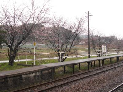4/12くだり桜