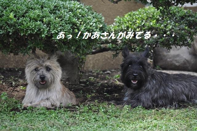 20140914(2).jpg