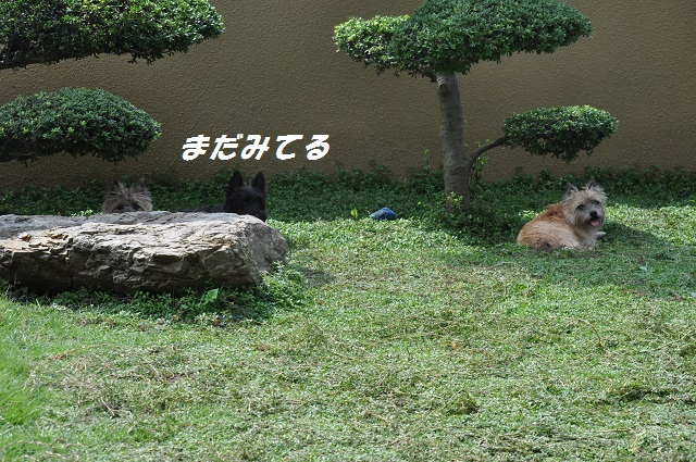 20140914(3).jpg