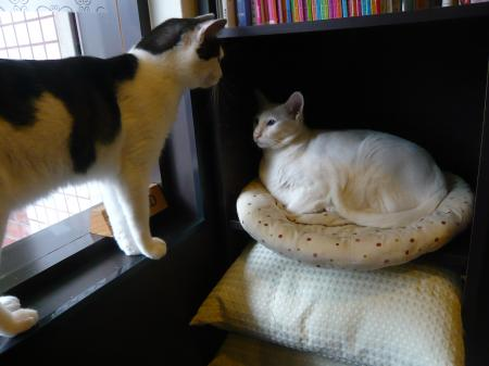 マナとレア