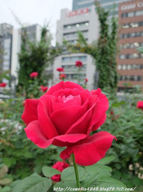1029nakanoshima-1.jpg