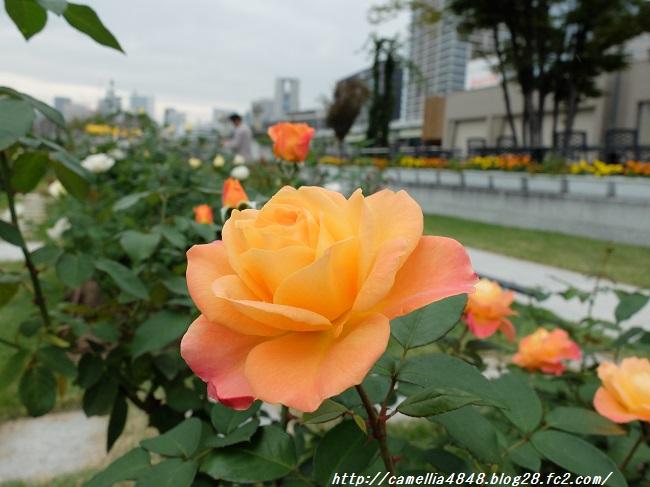 1029nakanoshima-7.jpg