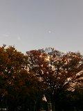 20131111上野公園