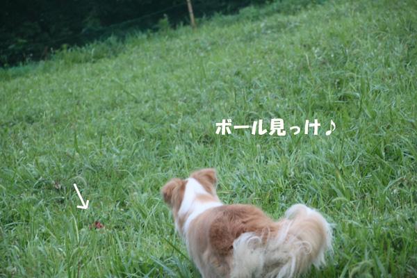 IMG_2187--.jpg
