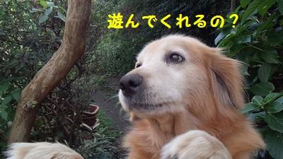 201311220123059c4.jpg