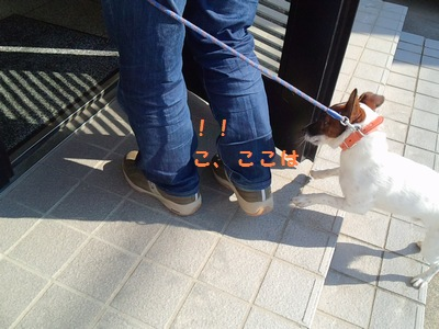 201311七種②