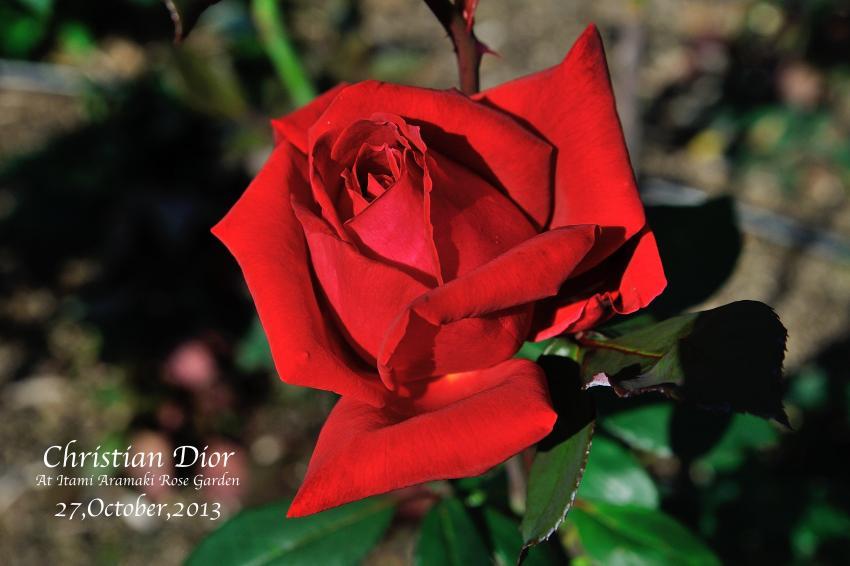 DSC_0578-L_convert_20131119124825.jpg