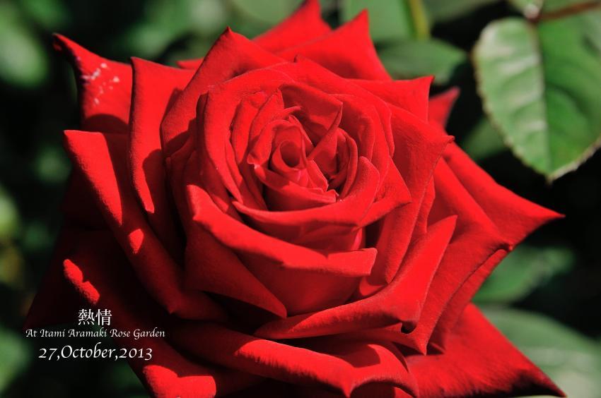 DSC_0683-L_convert_20131119130457.jpg