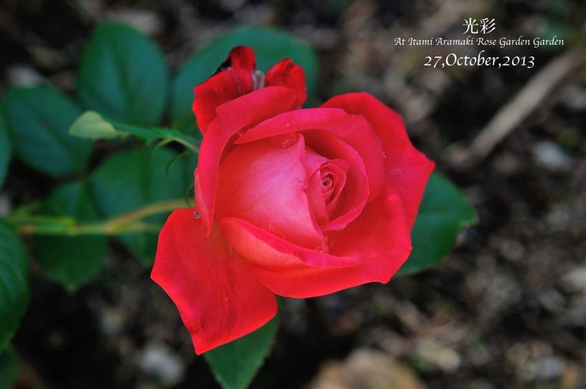 DSC_0709-L_convert_20131119130820.jpg