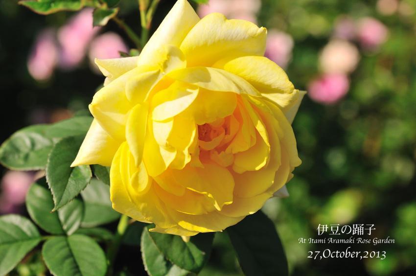 DSC_0795-L_convert_20131119132113.jpg