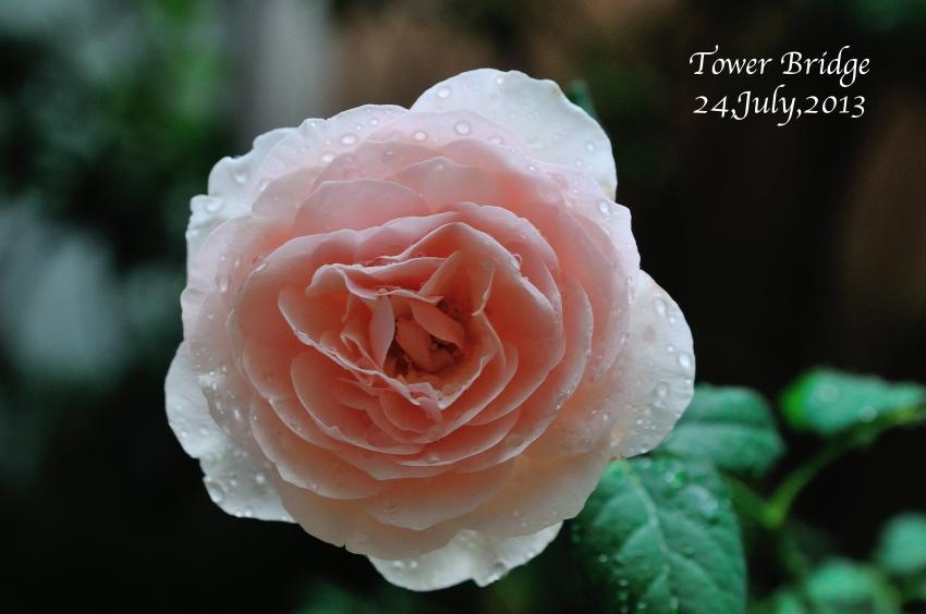 DSC_3527-L_convert_20130724074534.jpg