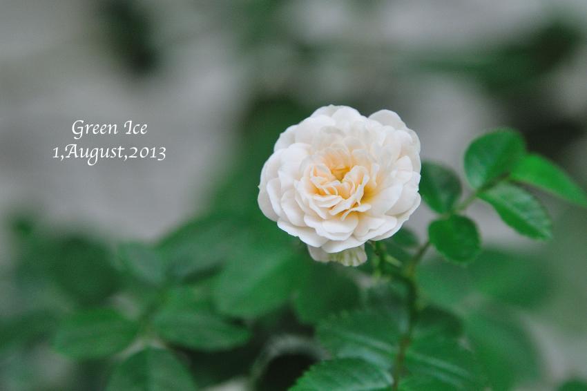 DSC_3623-L_convert_20130801215221.jpg
