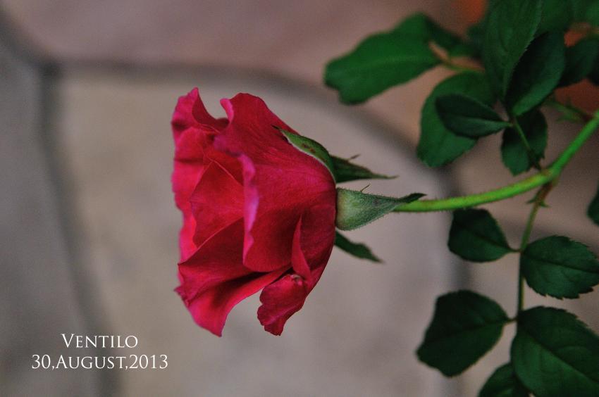 DSC_5306-L_convert_20130830074041.jpg