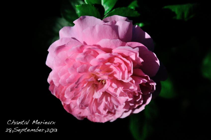 DSC_7639-L_convert_20130928102219.jpg