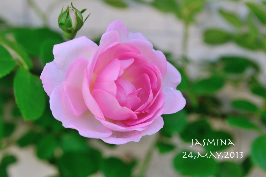 DSC_8554-L_convert_20130606070839.jpg