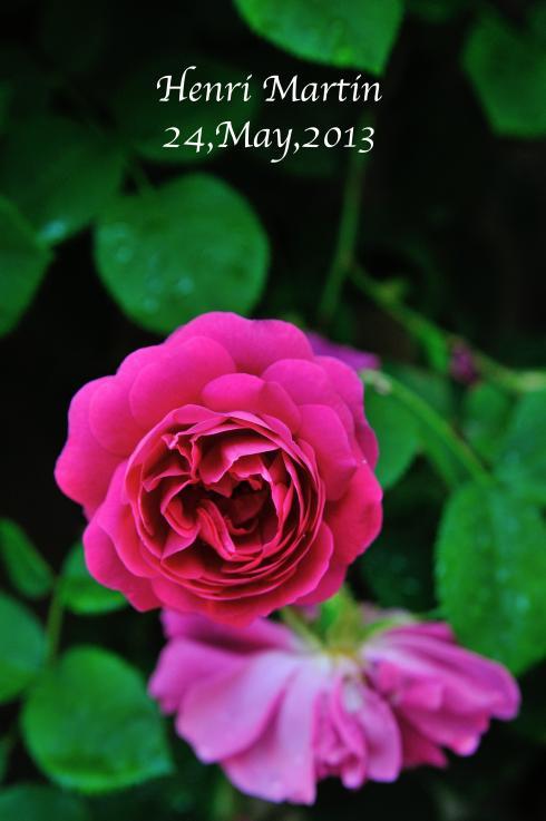 DSC_8572-L_convert_20130606070806.jpg