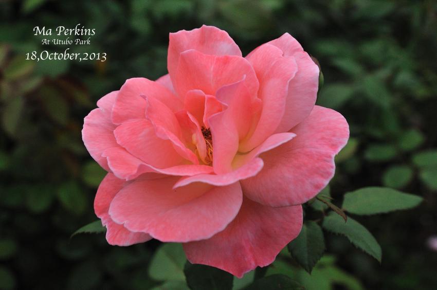 DSC_9133-L_convert_20131025072519.jpg
