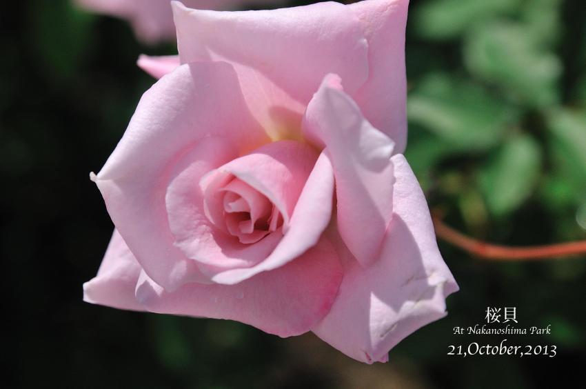 DSC_9849-L_convert_20131025085056.jpg