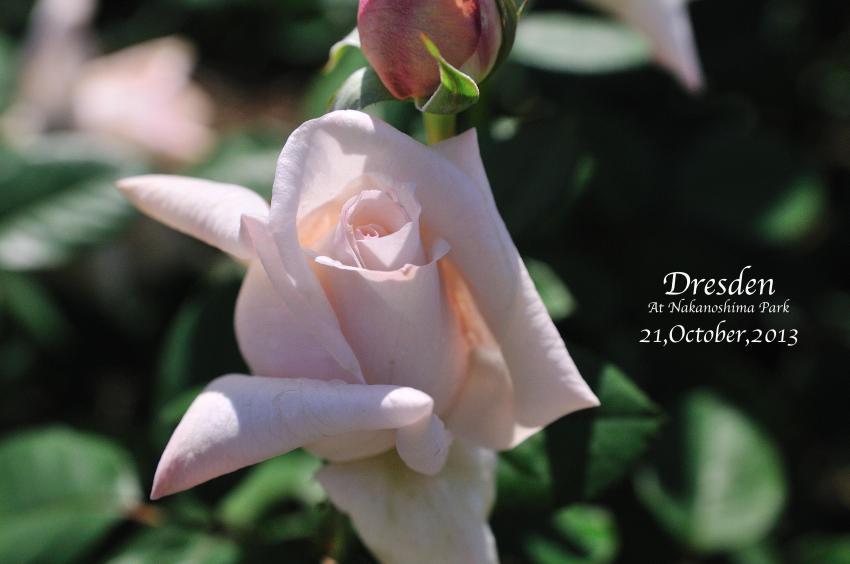 DSC_9915-L_convert_20131025081248.jpg