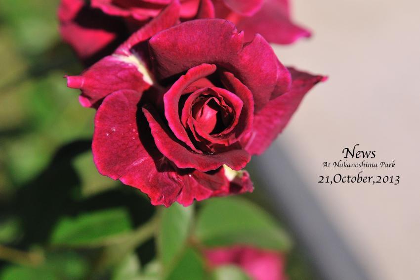 DSC_9986-L_convert_20131025081652.jpg